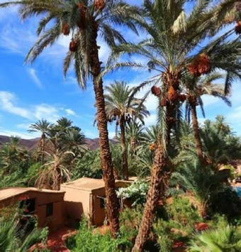 Marrakech Day Trip to 3 Valleys in Atlas Mountains